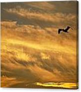 Pelican Against The Golden Sky Canvas Print
