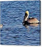 Pelican And Gull Canvas Print
