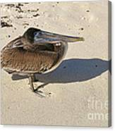 Pelican And His Shadow Canvas Print