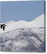 Pelican And Mountains Canvas Print