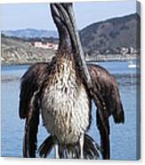 Pelican At Avila Beach Ca Canvas Print
