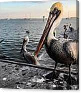 Pelican At The Pier Canvas Print