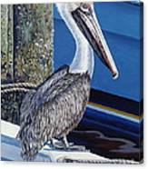Pelican Blues Canvas Print