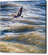 Pelican Briefly Canvas Print