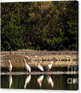Pelican Clean Up Time Canvas Print