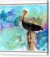 Pelican Colours Canvas Print