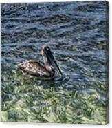 Pelican Floater Canvas Print