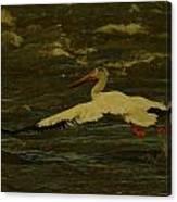 Pelican Flying Low Canvas Print