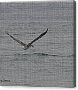 pelican Flying Low Canvas Print