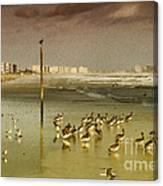 Pelican Haven Canvas Print