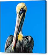 Pelican In Key Largo Canvas Print