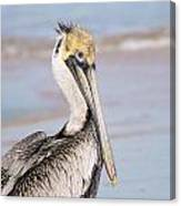 Pelican In Need Canvas Print