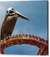 Pelican In St. Croix Canvas Print