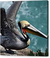 Pelican Lift Off Canvas Print