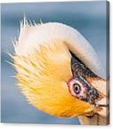 Pelican Looking Upside Down Canvas Print