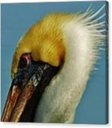Pelican Mohawk 1/13 Canvas Print