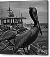 Pelican On Pier Canvas Print