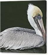 Pelican On The Intercostal Canvas Print