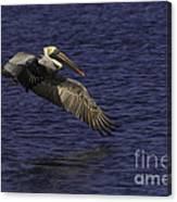Pelican Over Water Canvas Print