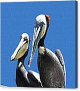 Pelican Pair At Oceanside Pier Canvas Print