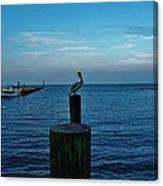 Pelican Pamlico Sound Hatteras 2/11 Canvas Print