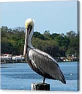 Pelican Point Canvas Print