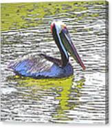 Pelican Reflections Canvas Print