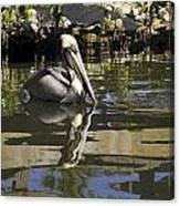 Pelican Reflected Canvas Print