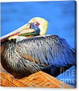 Pelican Rest Canvas Print