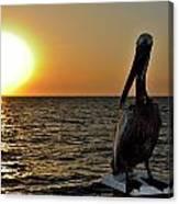 Pelican Sunset 2 Canvas Print