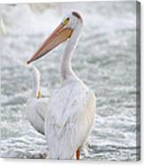 Pelican Watch Canvas Print