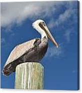 Pelican With Sky Canvas Print