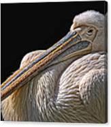 Pelicano Canvas Print