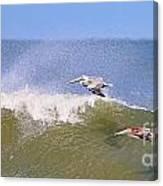 Pelicans 3868 Canvas Print