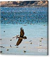 Pelicans Flocking On The Ocean Canvas Print