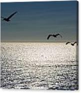 Pelicans In Flight Canvas Print
