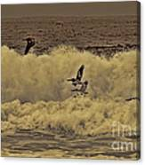 Pelicans In The Surf Canvas Print