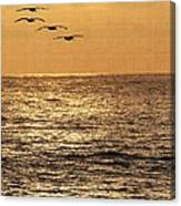 Pelicans Ocean And Sunsetting Canvas Print