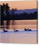 Pelicans On Parade Canvas Print