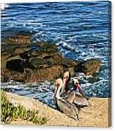 Pelicans On The Cliff - La Jolla Cove Canvas Print