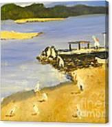 Pelicans On The Shore Canvas Print