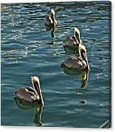 Pelicans On The Water In Key West Canvas Print