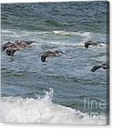 Pelicans Over The Water Canvas Print