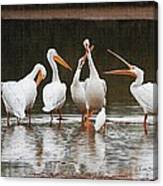 Pelicans Singing Auld Lang Syne Canvas Print