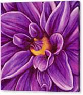 Pencil Dahlia Canvas Print