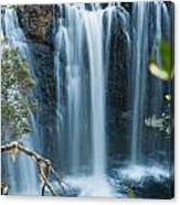 Pencil Pine Falls Cradle Mountain Canvas Print