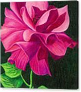 Pencil Rose Canvas Print