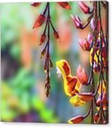 Pending Flowers Canvas Print