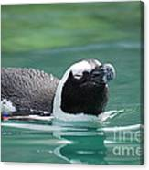 Penguin Gliding On Water's Surface Canvas Print