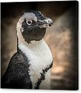 Penguin Posing Canvas Print